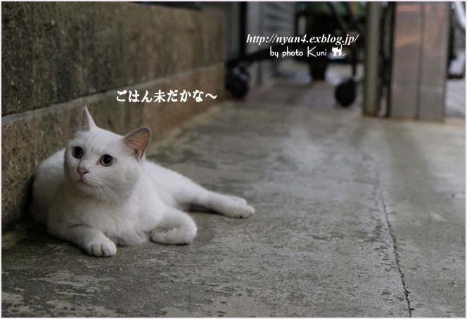 f0166234_01163237.jpg