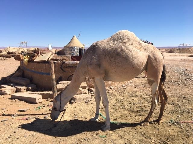 サハラ砂漠inモロッコ_a0171939_18350801.jpg