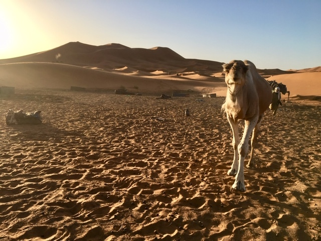 サハラ砂漠inモロッコ_a0171939_18370431.jpg