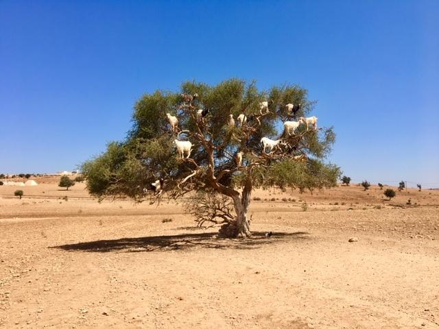 サハラ砂漠inモロッコ_a0171939_18372475.jpg
