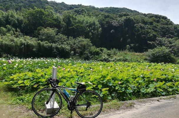 島田島の古代蓮とランチ その1_b0149340_20335496.jpg