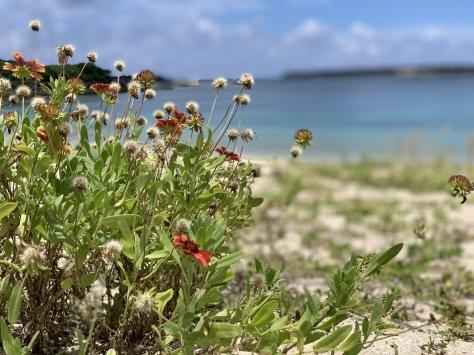 7月27日 ゆっくりできそうなビーチ_b0158746_15145371.jpeg