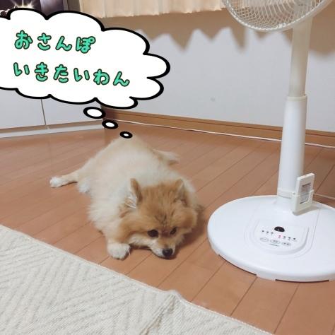 夏休みのお知らせ_b0208246_14135418.jpeg