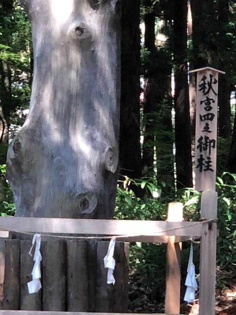 神社シリーズⅡ_f0110349_17274317.jpg