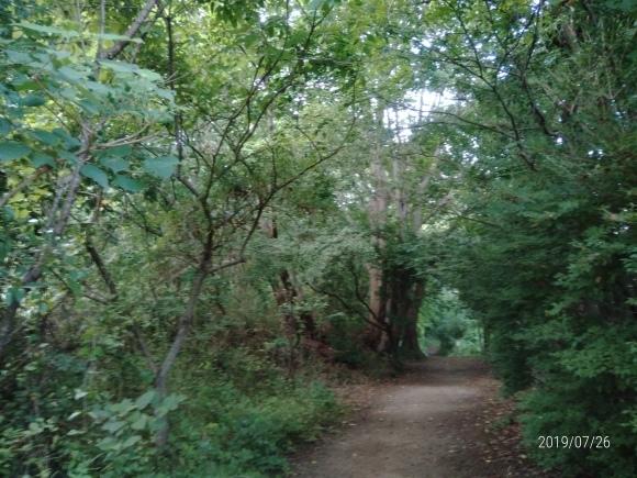 北本自然観察公園のホタル_d0116059_16005373.jpg