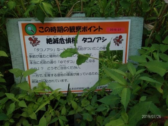 北本自然観察公園のホタル_d0116059_16055552.jpg