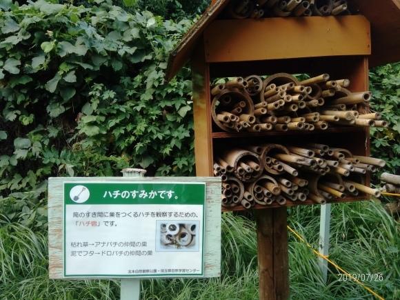 北本自然観察公園のホタル_d0116059_16095296.jpg