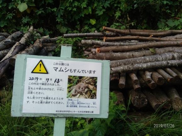 北本自然観察公園のホタル_d0116059_16103160.jpg