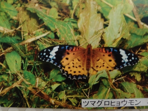 北本自然観察公園のホタル_d0116059_16200261.jpg