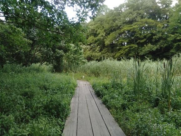 北本自然観察公園のホタル_d0116059_18380685.jpg
