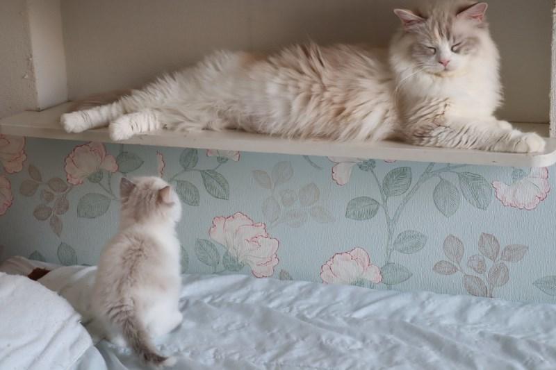 今日の子猫達 傍に行きたい_a0285571_23171133.jpg
