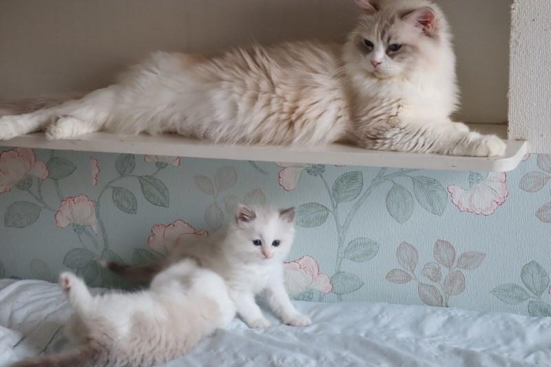今日の子猫達 傍に行きたい_a0285571_23172364.jpg