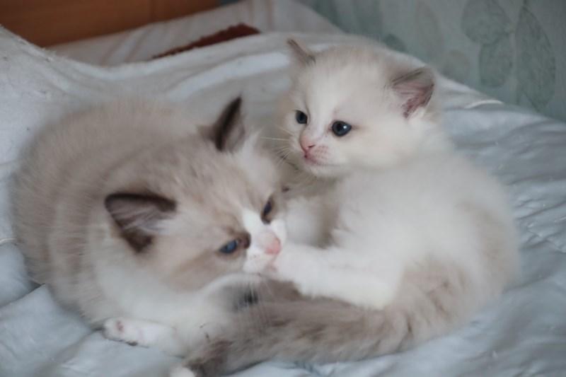 今日の子猫達 傍に行きたい_a0285571_23172996.jpg