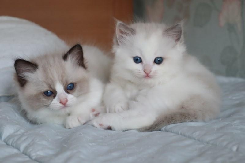 今日の子猫達 傍に行きたい_a0285571_23173487.jpg