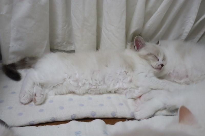 今日の子猫達 傍に行きたい_a0285571_23180644.jpg