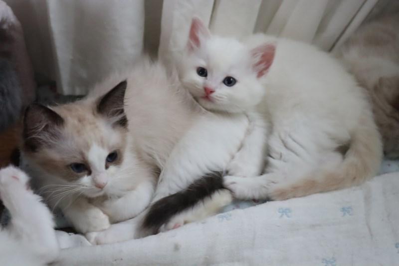 今日の子猫達 傍に行きたい_a0285571_23181377.jpg