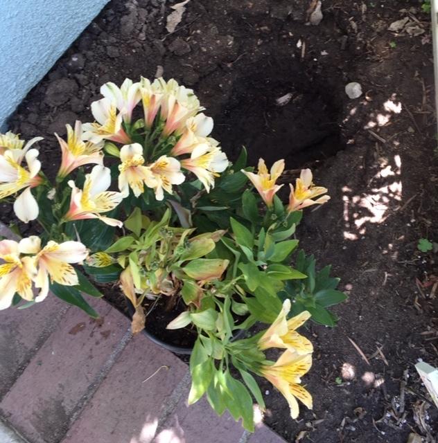 7月の庭仕事_e0350971_12342875.jpg