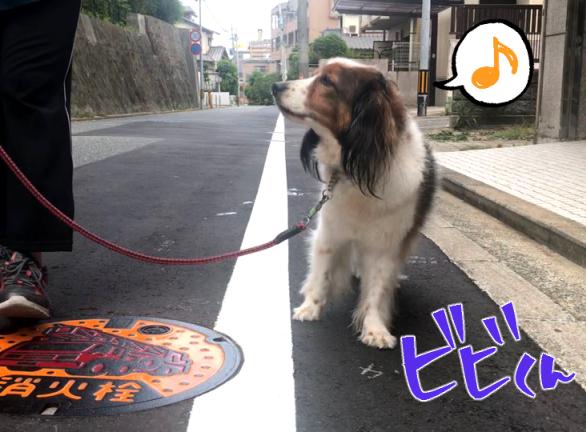 お散歩♪♪_f0357682_17400458.jpg
