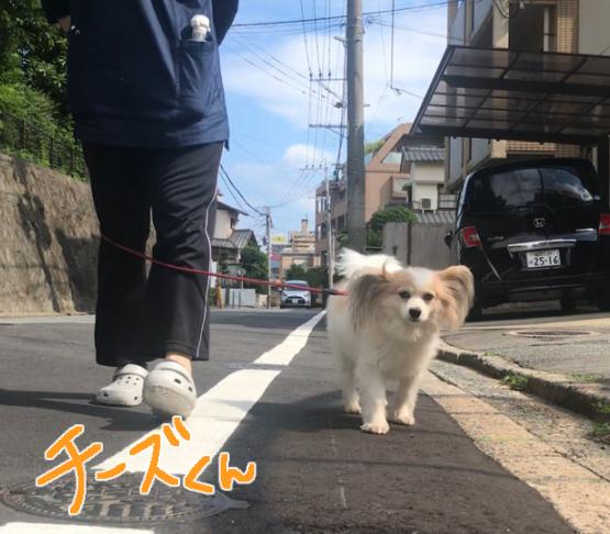 お散歩♪♪_f0357682_17401219.jpg