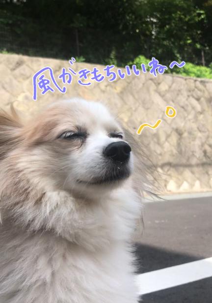 お散歩♪♪_f0357682_17401781.jpg