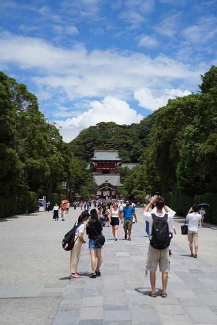 鎌倉の散歩 夏の花_b0145398_22575345.jpg
