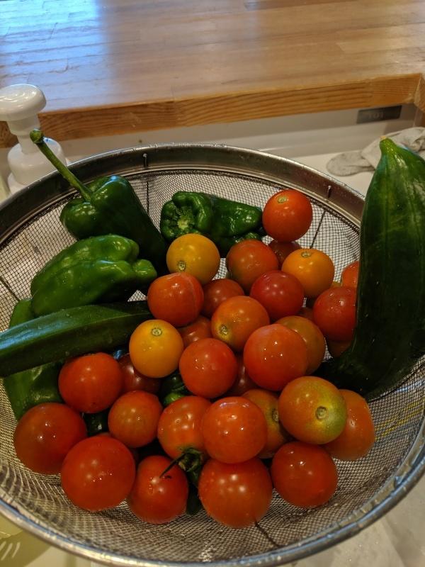 畑のお野菜_f0376200_16012352.jpg