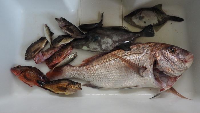 夫の釣果とその後(鯛の大物)_c0116915_00432761.jpg