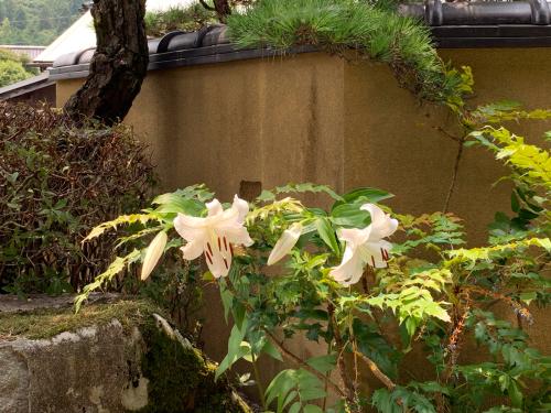 庭のカサブランカ_d0025421_12240172.jpg