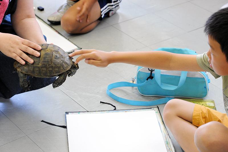リクガメと卵を写生しよう_b0212226_22505892.jpg