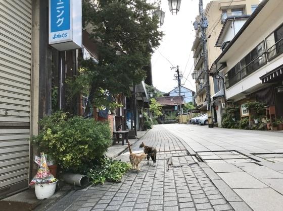 渋温泉 志賀高原ビール タングラム 海鮮丼_b0132338_15501907.jpeg