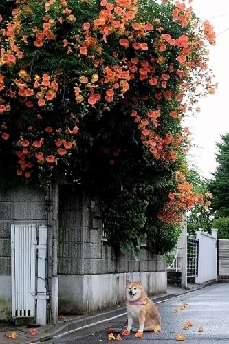 夏花と暑さボケ_b0314043_08080142.jpg