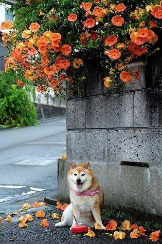 夏花と暑さボケ_b0314043_08081417.jpg