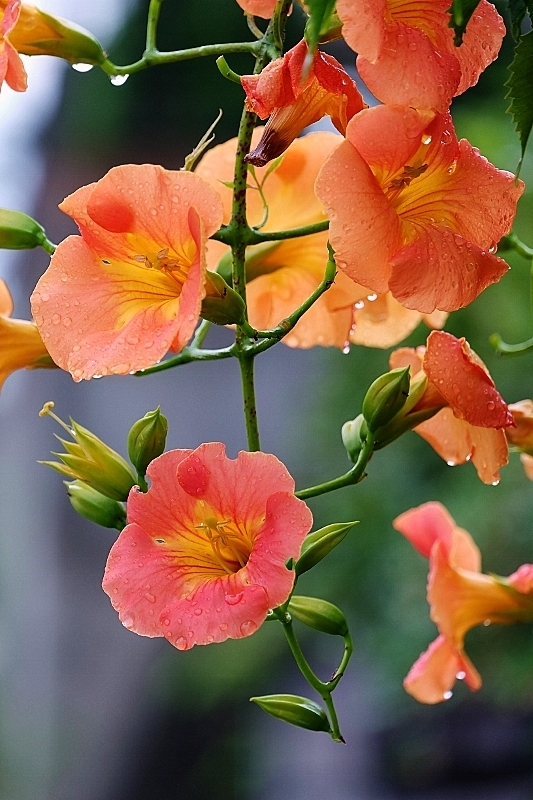 夏花と暑さボケ_b0314043_08084162.jpg