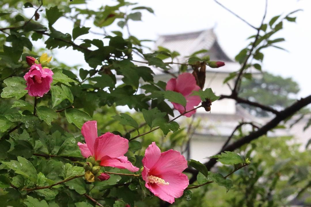 ヤマガラ_e0403850_10534964.jpg