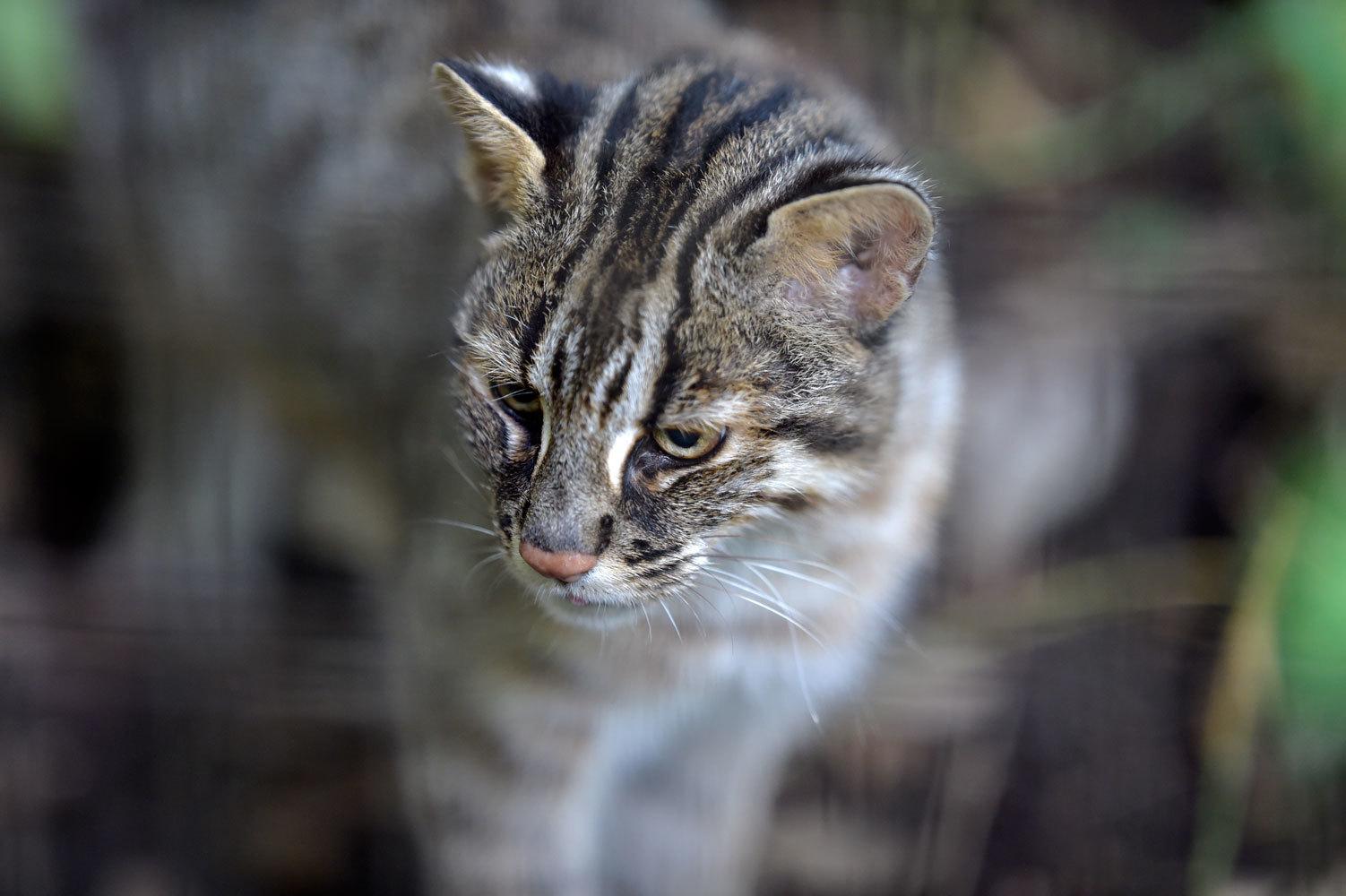 猫の日常_b0023856_05432998.jpg