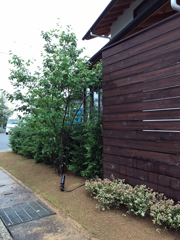植栽再生_d0245357_10295706.jpg