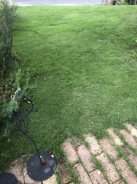 密生した芝生が美しい_a0243064_23582398.jpg