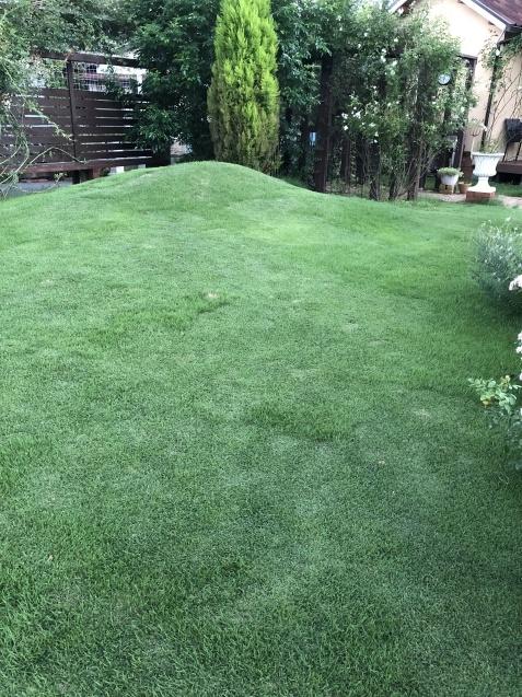 密生した芝生が美しい_a0243064_23584659.jpg