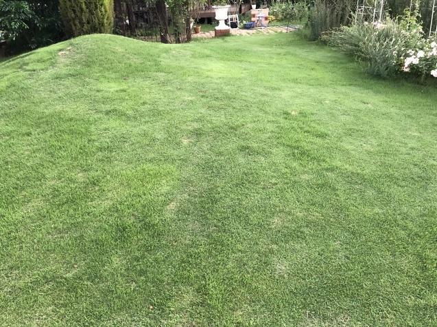 密生した芝生が美しい_a0243064_23590632.jpg