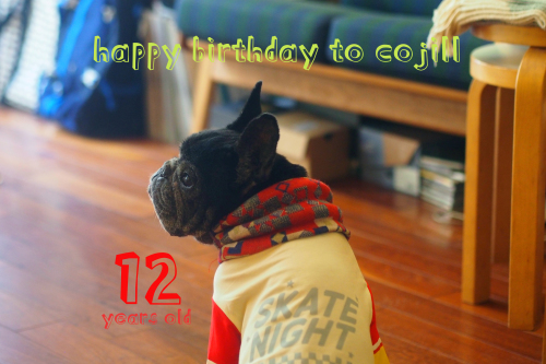 happy 12th birthday to cojill_e0243765_23241668.jpg