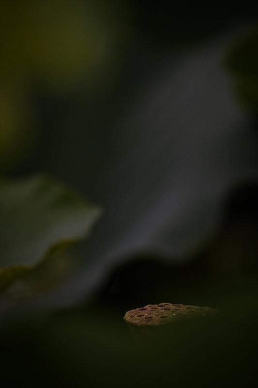 花より果托_e0071967_1072615.jpg