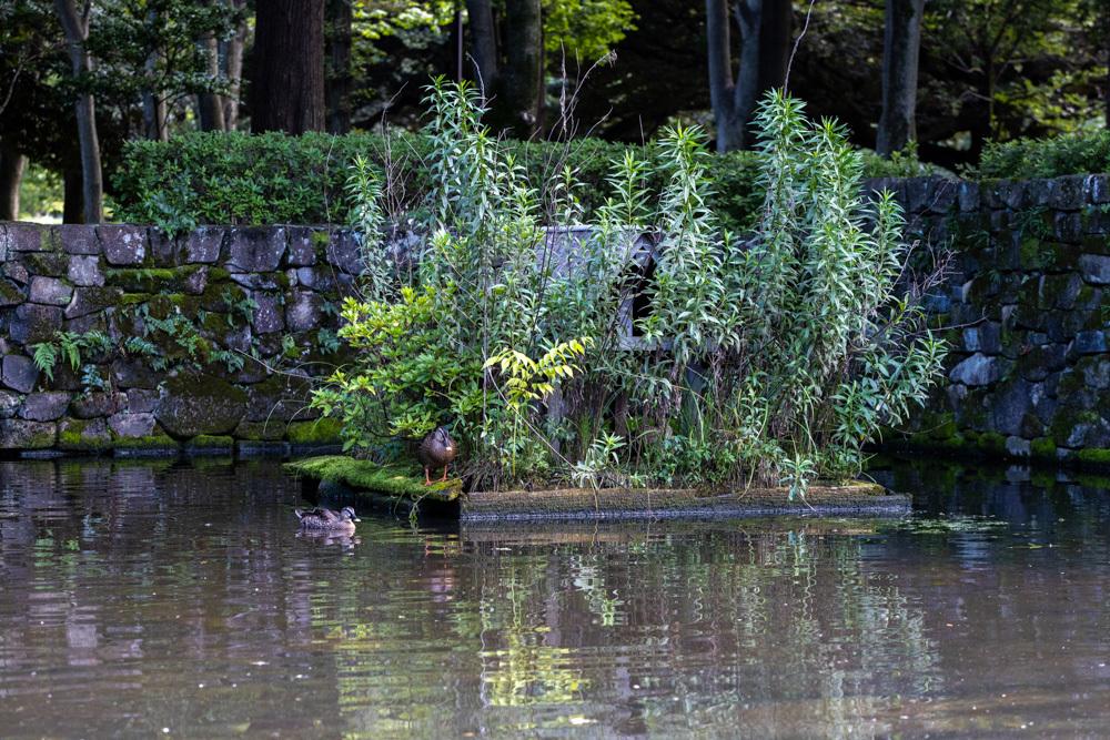 森公園にて_a0261169_15274822.jpg