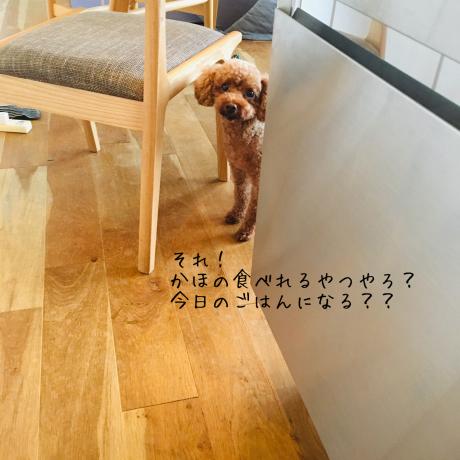 夏野菜_b0370192_09005019.jpg