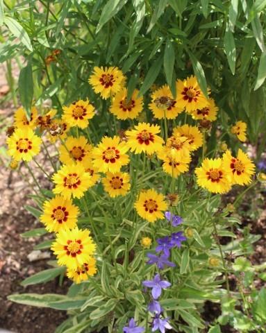 斑入り葉を集めるフイラーなワタクシ_e0341606_19423793.jpg