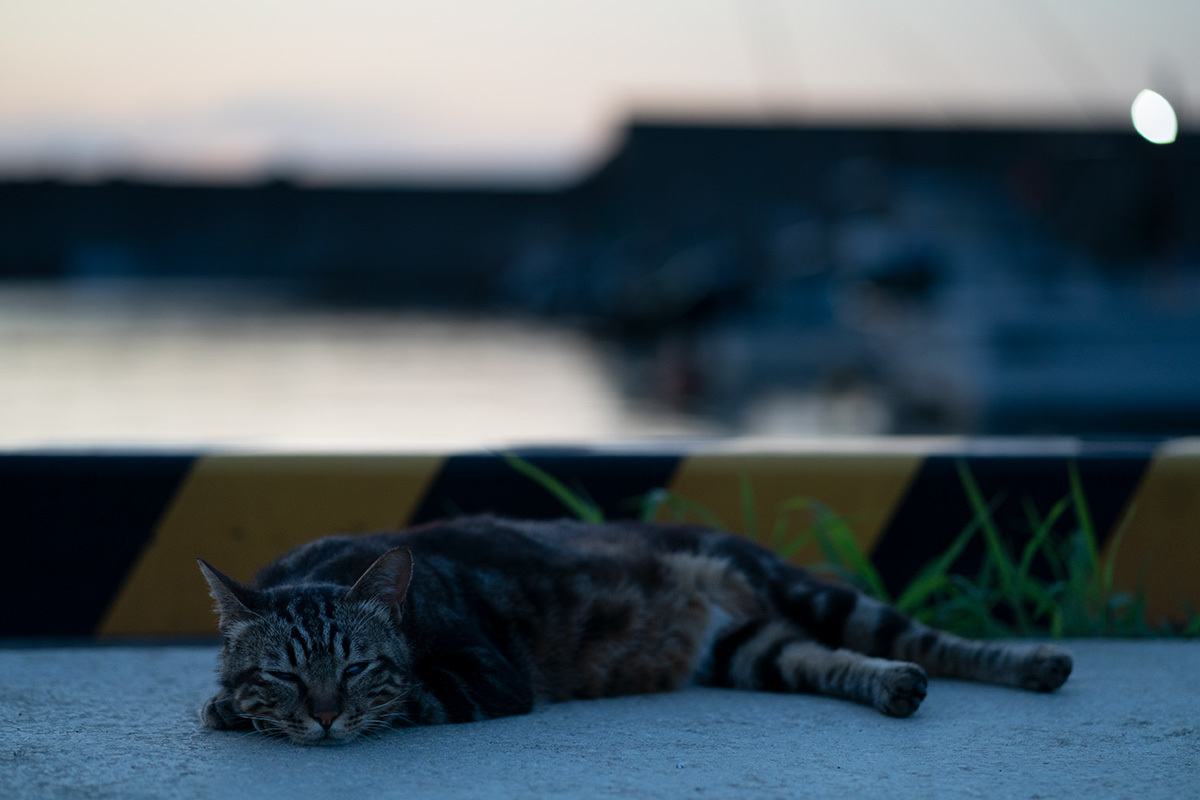 夏の宵 in the twilight time #SONYα9#FUJIGFX50s_c0065410_22070513.jpg