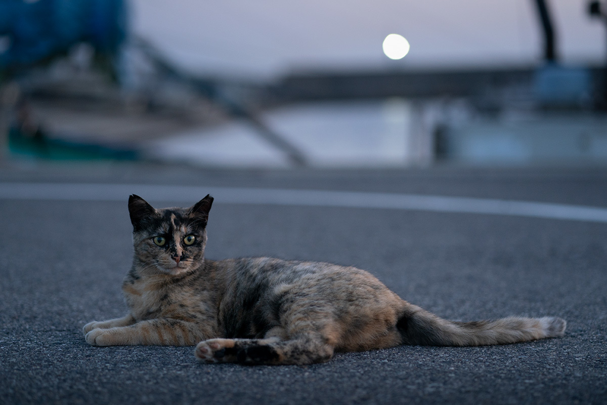 夏の宵 in the twilight time #SONYα9#FUJIGFX50s_c0065410_22074774.jpg