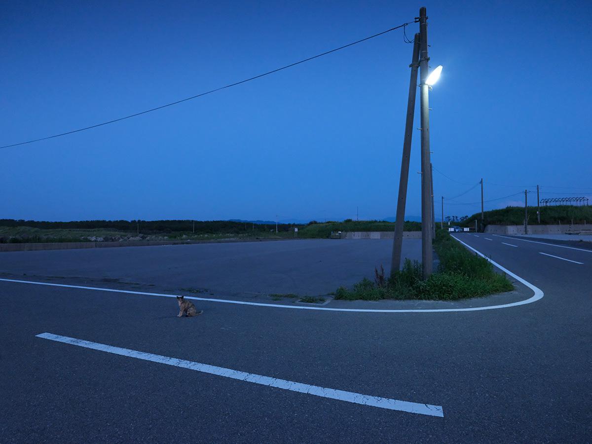 夏の宵 in the twilight time #SONYα9#FUJIGFX50s_c0065410_22081754.jpg