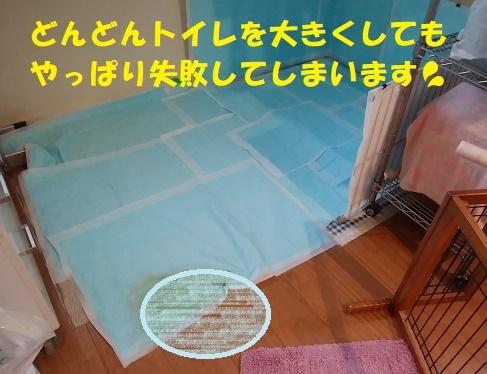 f0121712_00405788.jpg