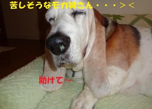 f0121712_01024869.jpg