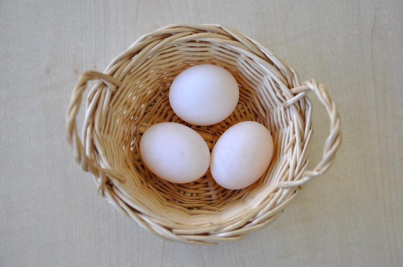 リクガメと卵を写生しよう_b0212226_16261112.jpg